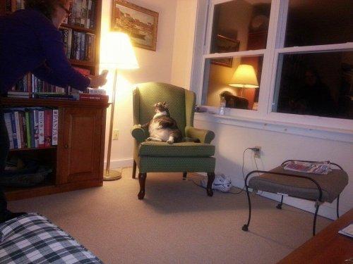 El gato más gordo del mundo vive en un hotel