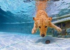 ensenar-a-nadar-a-tu-perro