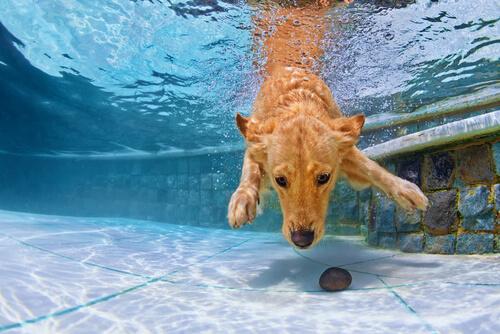 ¿Se puede enseñar a un perro a nadar?