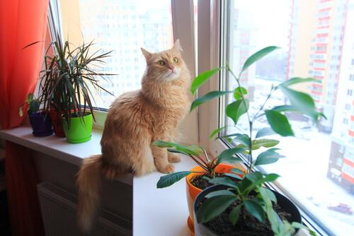 Consejos para que tu gato esté seguro en el hogar