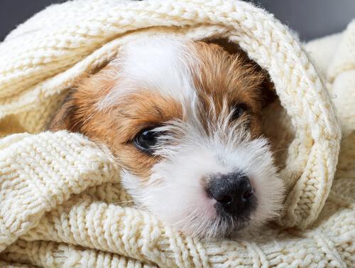 Cuándo podemos decir 'Sí' a la eutanasia