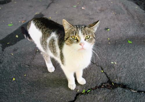 gato casero abandonado