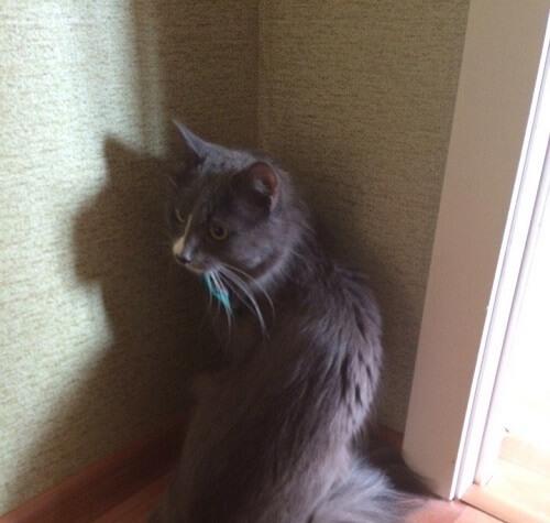 gato-ruso-2