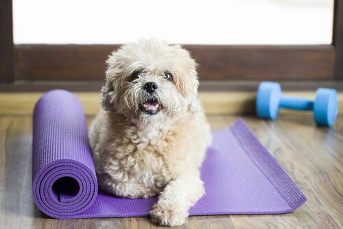 ¿Ya conoces los gimnasios para perros?