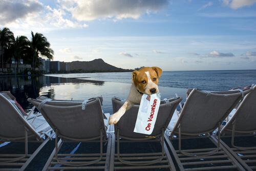 Hotel donde tu perro se va a alojar