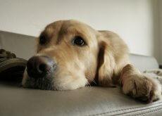 instintos-de-tu-perro