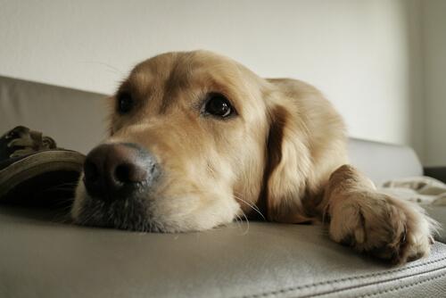 Instintos de tu perro que debe satisfacer en el hogar