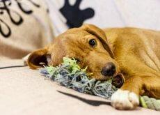 juguetes-para-tu-perro