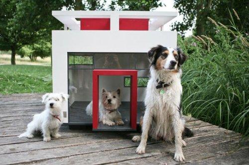 Conoce las mansiones más lujosas para los perros