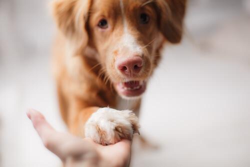 Como mantener a un perro en crisis económica
