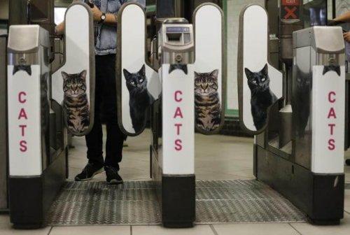 El metro de Londres quita publicidad y pone fotos de gatos