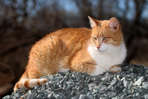 Todo lo que debes saber sobre los parásitos externos del gato