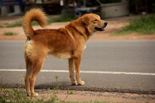 perro-aprende-a-cruzar-la-calle