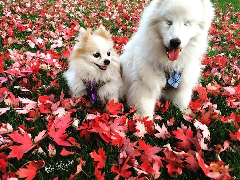 perro-ciego-y-su-perro-lazarillo-2