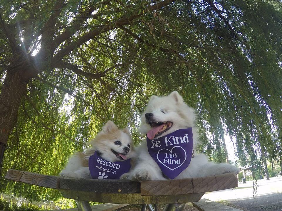 perro-ciego-y-su-perro-lazarillo-3