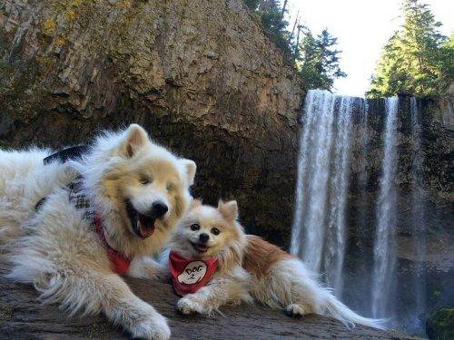 El perro ciego que tiene un perro lazarillo