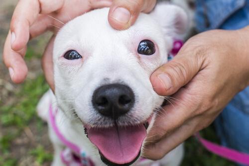 perro-con-fobias-a-los-perros