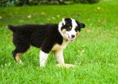 perro-con-heces-amarillas