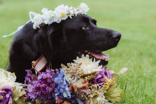 Un perro con tumor cerebral fallece después de asistir a la boda de su dueña