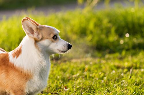 ¿El sol causa daños en la piel de nuestras mascotas?