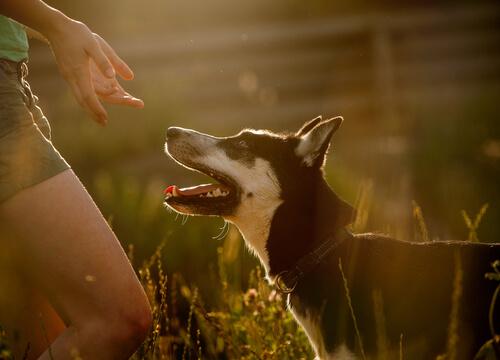 Perro protector para mujeres maltratadas