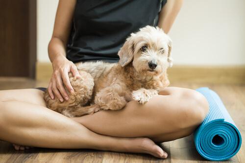 Ejercicios de yoga para hacer con tu perro