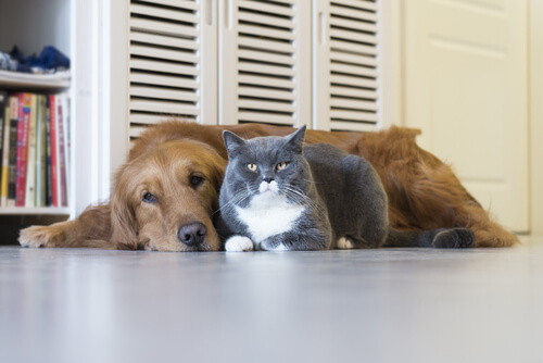 Cat and dog laying together on the floor