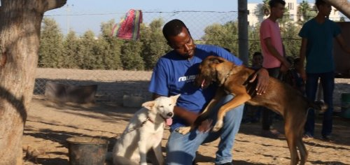 A man playing with rescue dogs.