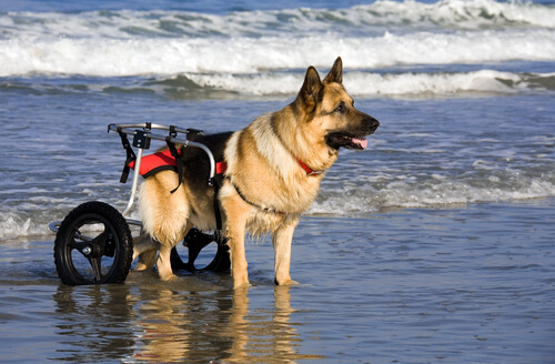 Carros para perros: 10 ventajas