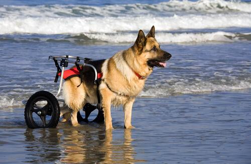 Тележки для собак: 10 преимуществ