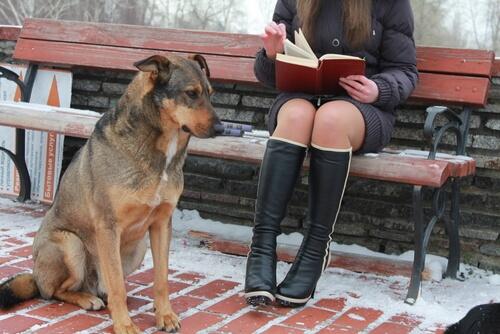 Conoce a los perros universitarios
