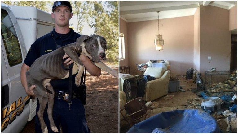 Rescatados pitbulls abandonados que estaban en muy malas condiciones