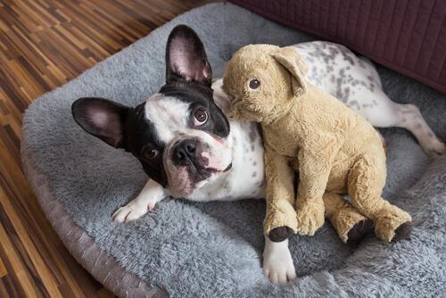 ¿Existe la custodia compartida de mascotas?
