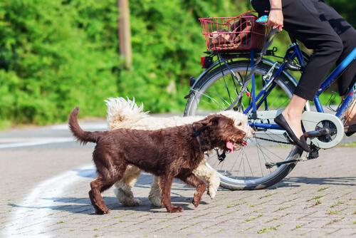 Si llevas a tu perro en bici, sigue estos consejos