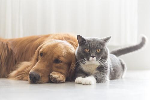 Las 7 enfermedades más peligrosas que puede sufrir tu mascota