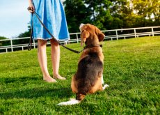que tu perro acuda a tu llamado