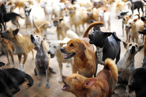 ¿Qué hizo Holanda para ser el primer país sin animales callejeros?