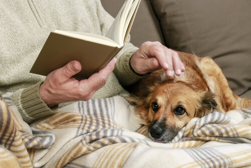 Persona mayor acariciando a un perro.