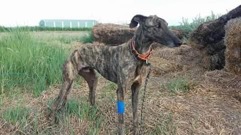 terapia-para-perros-rescatados