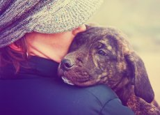tratar-a-un-perro-como-bebe