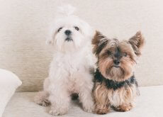 un-ano-de-perro-equivale-a-7-de-humano