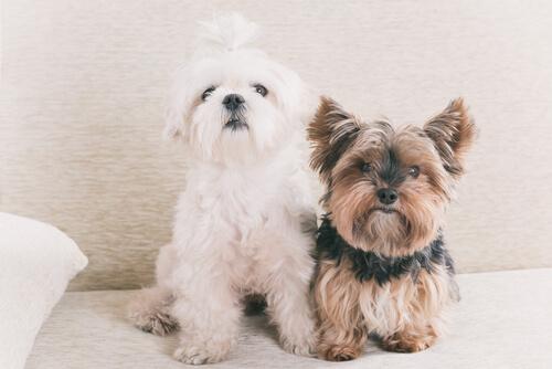 Realidad o mito: ¿un año de perro equivale a siete de humano?