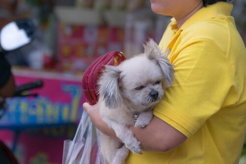 Primer operativo contra locales de venta de perros en Caracas