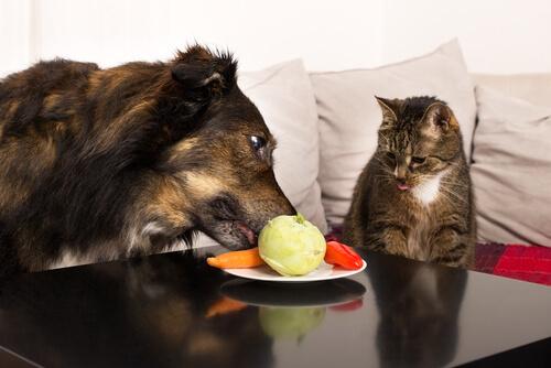 Qué frutas y verduras son geniales para tu mascota
