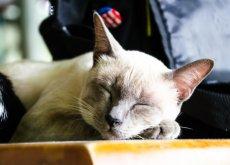 adoptar-a-un-gato-anciano