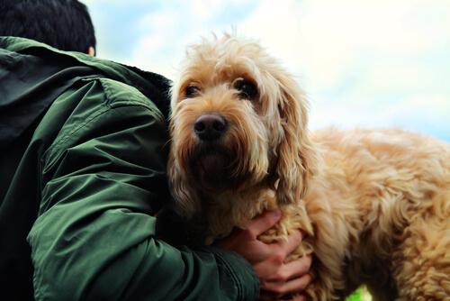 Secretos de la verdadera amistad entre el perro y el hombre