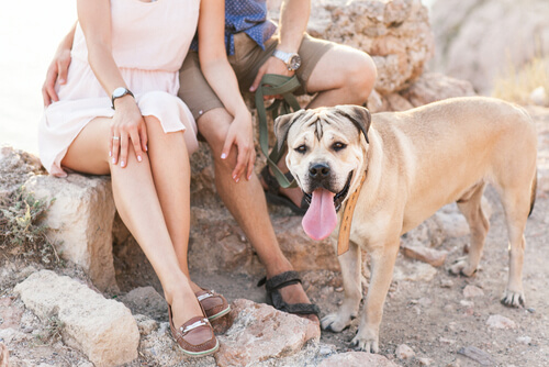 5 beneficios de convivir con perros