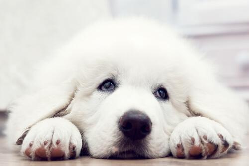 El cortometraje de perros que muestra lo que puede hacer un perro por ser adoptado