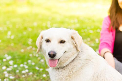 5 cosas que no le gustan a tu perro