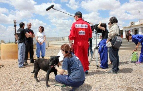 Un documental impresionante contra el abandono de animales